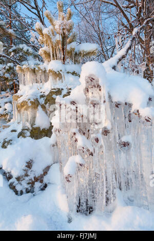 Beautiful icicle ice formation on small tree - Stock Photo