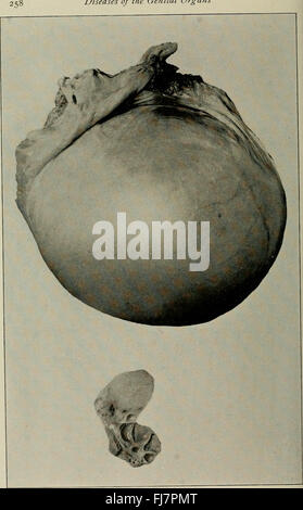 The diseases of the genital organs of domestic animals (1921) - Stock Photo