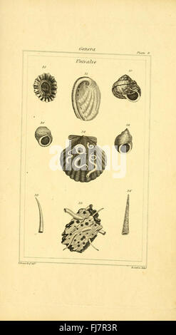The elements of conchology; or Natural history of shells - Stock Photo