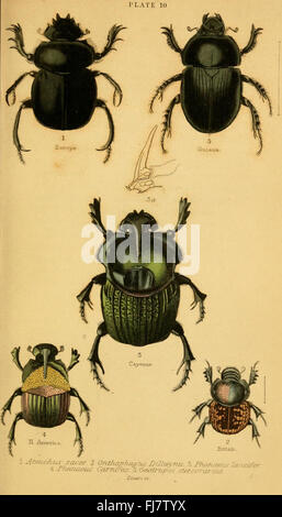 The natural history of beetles (Plate 10) - Stock Photo