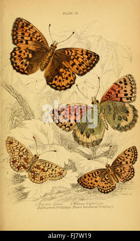 The natural history of British butterflies (Plate 15) - Stock Photo