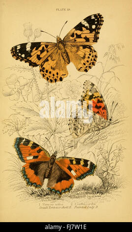 The natural history of British butterflies (Plate 19) - Stock Photo