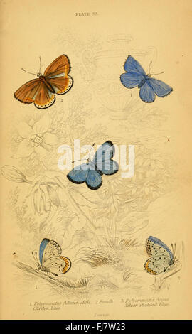 The natural history of British butterflies (Plate 33) - Stock Photo