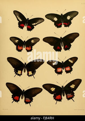 Catalogue of lepidopterous insects in the collection of the British Museum - Stock Photo