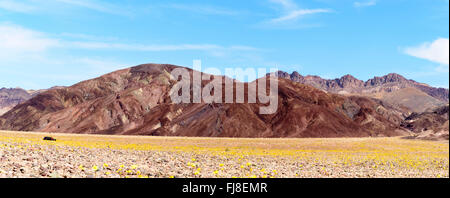 Panoramic view of yellow wildflowers field with chocolate brown hills in background under blue sky with white clouds. - Stock Photo