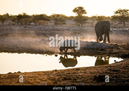 Rhino and an Elephant - Stock Photo