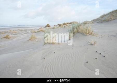 Dunes on Langeoog, East Frisia, Lower Saxony, Germany - Stock Photo
