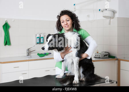 Veterinarian, female vet examining dog with stethoscope, Border Collie - Stock Photo
