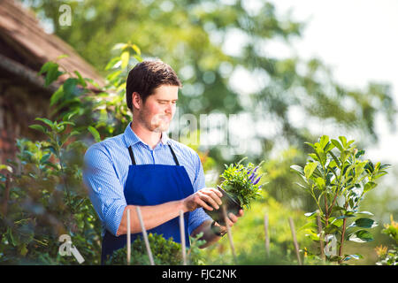 Gardener holding plant, in his garden, green sunny nature - Stock Photo