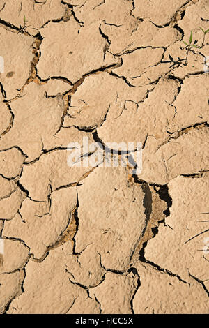 Cracked mud on dried up lake bed after drought cuba stock photo detail of dried cracked mud stock photo sciox Images