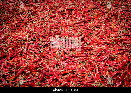 A photo of Red Chili pattern - Stock Photo