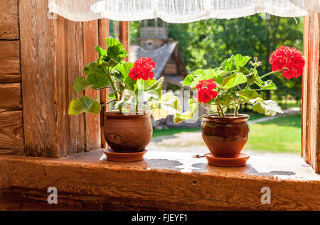 Geranium flowers on the window of old rural wooden house in sunny day - Stock Photo