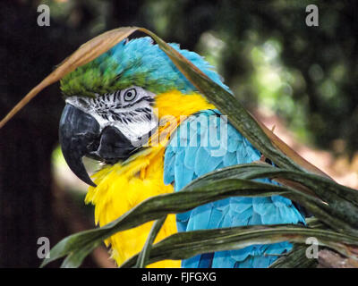 Ara parrot in a tree - Stock Photo