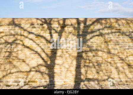 Tree shadow pattern on a stone garden wall - Stock Photo