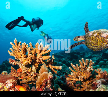 Scuba divers explore a coral reef - Stock Photo