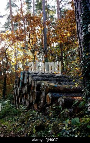Stack Of Logs In Forest - Stock Photo