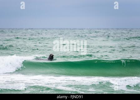 Seal Swimming In Sea Against Sky - Stock Photo