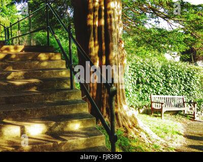 Close-Up Of Cropped Stairs Against Trees - Stock Photo