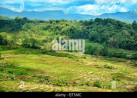 Green rice field terraces in Tana Toraja. South Sulawesi, Indonesia - Stock Photo