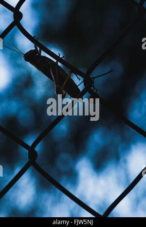 Grasshopper On Chainlink Fence Against Blue Sky - Stock Photo