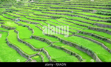 High Angle View Of Rice Terraces On Mountain - Stock Photo