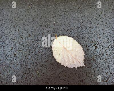 Directly Above View Of Wet Leaf On Stone - Stock Photo