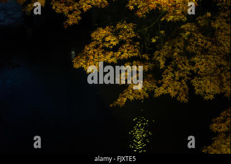 High Angle View Of Tree Over Lake At Night - Stock Photo