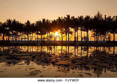 Coconut palms on the sandy beach of the tropical island. Koh Chang. Thailand. - Stock Photo