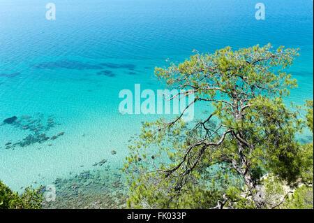 Turquoise clear water, sea, Aleppo pine (Pinus halepensis), Thermaic Gulf, near Sani, Kassandra region, Chalcidice, - Stock Photo