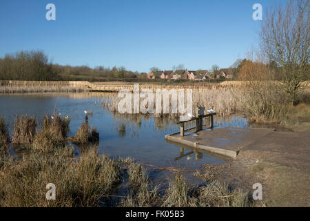 Wetlands habitat in urban wildlife park, bird feeding point - Stock Photo