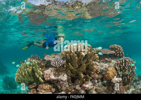 Snorkeler swimming the beautiful shallow coral reefs in the marine protected area near Kia Island. - Stock Photo
