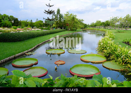A River with large lilies in on a summer's day, King's park, Bangkok - Stock Photo