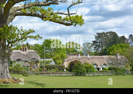 New Forest Lyndhurst Hampshire thatched country cottage Swan Green  countryside in centre of New Forest National - Stock Photo