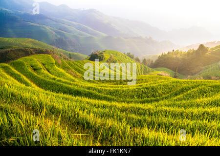Dragon Backbone Rice Terraces. Longji. China - Stock Photo