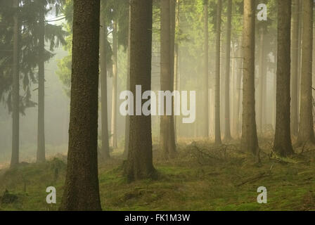 Wald im Nebel - forest in fog 02 - Stock Photo