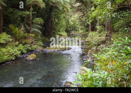 Whangarei Waterfalls New Zealand North Island - Stock Photo