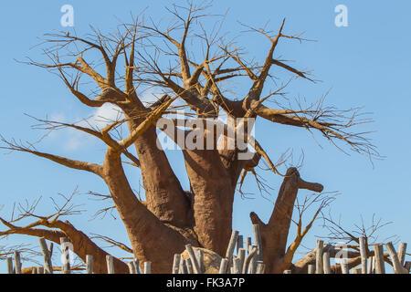 "Baobab tree, boab boaboa ""upside-down tree""  West Africa - Stock Photo"