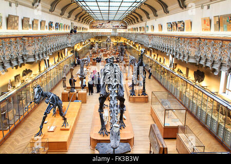 Skeletons of dinosaurs in the National Museum of Natural History - Stock Photo