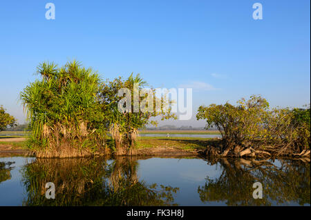 Yellow Water Billabong, Kakadu National Park, Northern Territory, NT, Australia - Stock Photo