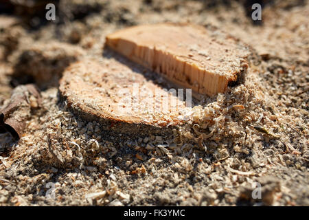 Closeup of an old apple tree stump after pruning the orchard - Stock Photo