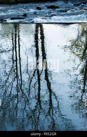 dam in a river, trees reflected in water - Stock Photo