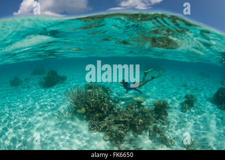 Snorkeler swimming in shallow reef in clear water shallow white sandy area. - Stock Photo