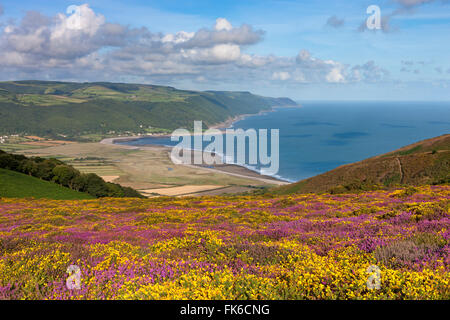 Flowering heather and gorse on Bossington Hill, with views to Porlock Bay beyond, Exmoor, Somerset, England, United - Stock Photo