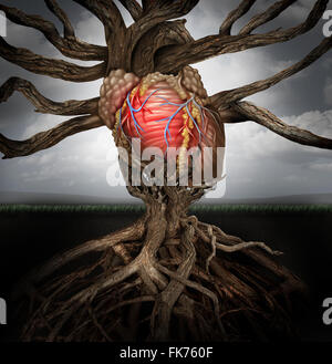 Human heart health concept as a symbol for growing a body organ and the veins and arteries of the circulatory system - Stock Photo