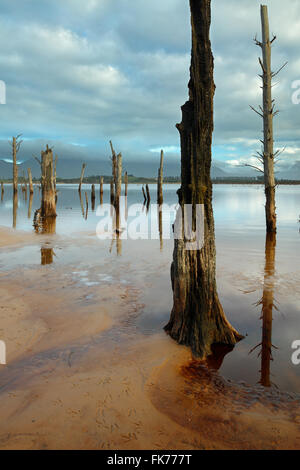 drowned trees on the shore of Theewaterskloofdam, western Cape, South Africa - Stock Photo