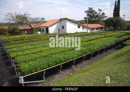 Nursery with native seedlings for reforestation of the Atlantic Forest - Stock Photo