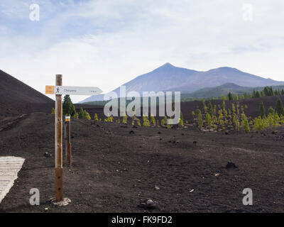 lava rocks, black sand and Canary Island pine, on a hike in Montanas Negras, mount Teide and a signpost for hikers, - Stock Photo