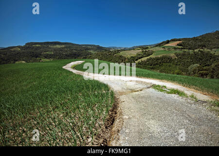 Road in the middle of planting chives - rural Burnt Ranch - Stock Photo