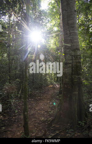 Hiking trail in the Amazon rainforest - Stock Photo