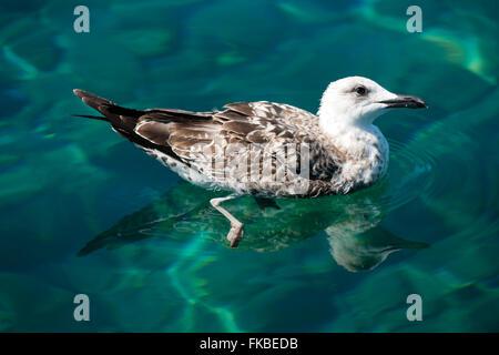 Kroatien, Insel Losinj, Veli Losinj, Möwe - Stock Photo